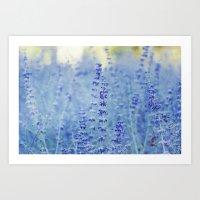 Blue Salvia Art Print
