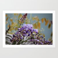 Wisteria - Photography Art Print