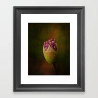 Allium In May Framed Art Print