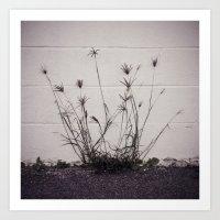 Wall Weeds II Art Print