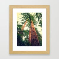 Redwoods Framed Art Print
