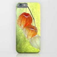 Physalis Sprig iPhone 6 Slim Case