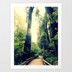 Muir Woods Path 2 Art Print