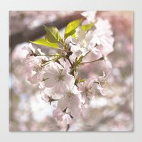 Tender Blossoms Canvas Print