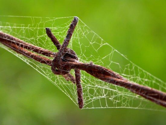 Barbed Wire Spiderweb Canvas Print