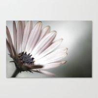 pink daisy. Canvas Print