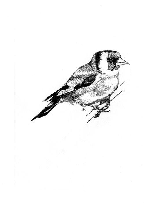 Solitary European Goldfinch Art Print
