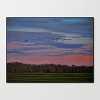 Geese Flying Over The Turf Farm Canvas Print