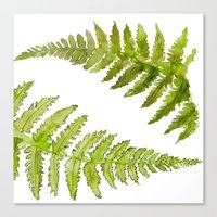 Etched Into Nature No.1 Forest Ferns Canvas Print
