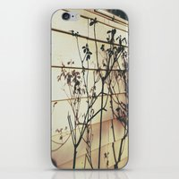 Branches Reflections iPhone & iPod Skin