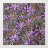 Canvas Print featuring Purple Clematis by LLL Creations