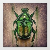 Scarab Beetle Canvas Print