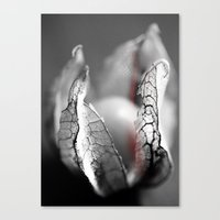 Physalis Canvas Print