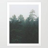 Pine Trees Through The M… Art Print