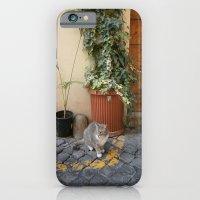 Roman Cat iPhone 6 Slim Case