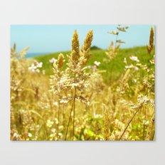 Fort Brag Seaglass Beach III Canvas Print