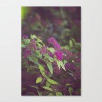 purple flower. Canvas Print