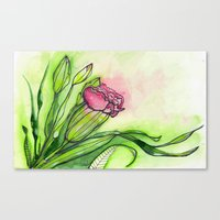Carnation Canvas Print