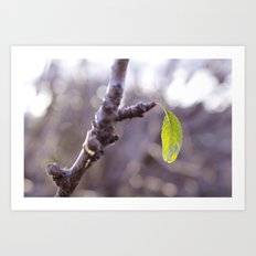 A sign of spring Art Print
