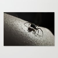 Shadow of a Spider Canvas Print