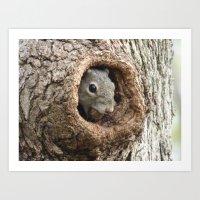 Peek A Boo Squirrel III Art Print