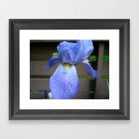 Crying Iris Framed Art Print