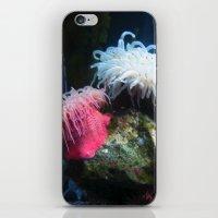 Anemone 2 iPhone & iPod Skin