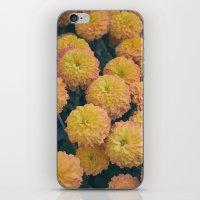 Autumn All Over Sunshine Chrysanthemums -- Fall Botanical iPhone & iPod Skin