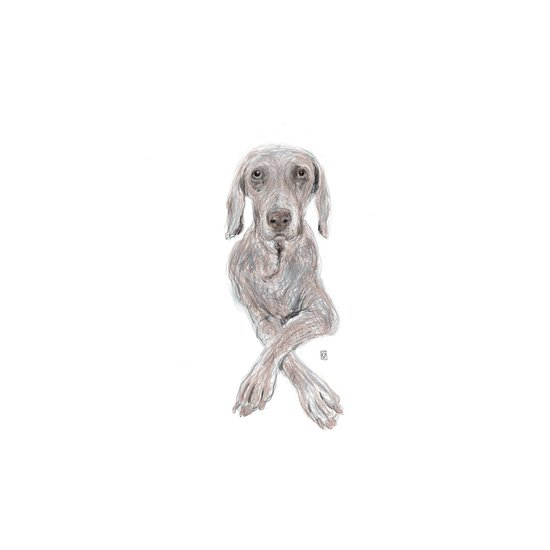 Weimaraner Therapy Canvas Print