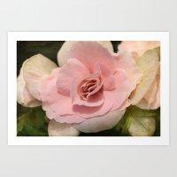 soft Begonia Art Print