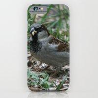 House Sparrow iPhone 6 Slim Case