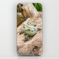 Lizard's Rest iPhone & iPod Skin