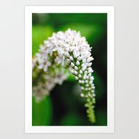 Spring has Bloomed Art Print
