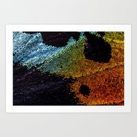 Vibrant Iridescence of The Madagascan Sunset Moth Art Print