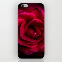 Texture Of A Rose iPhone & iPod Skin