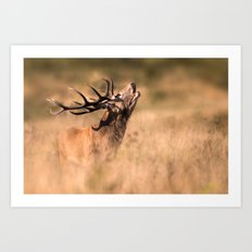 Red Deer Stag Art Print