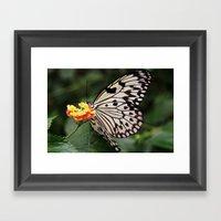 White Butterfly On Flowe… Framed Art Print