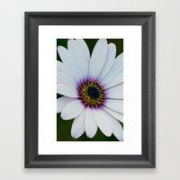 Blue Eyed Daisy III Framed Art Print