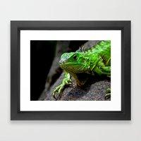 The Lizard King Of Aruba Framed Art Print