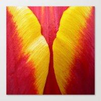 tulip petal Canvas Print