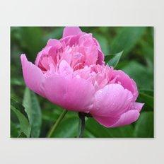 Peony Flower in bloom Canvas Print