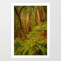 Redwoods Regional II Art Print