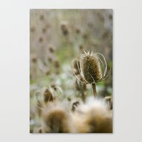 {a sea of teasels} Canvas Print