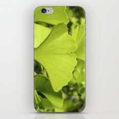 green ginkgo leaf VII iPhone & iPod Skin