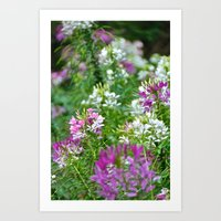 Purple and White Art Print