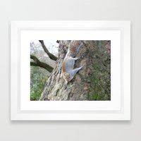 Squirrel Gymnastics Framed Art Print