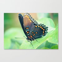 Color By Numbers Canvas Print