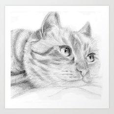 Cat sketch Art Print