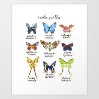 Exotic Moths Art Print
