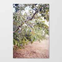 PLUM FARM Canvas Print